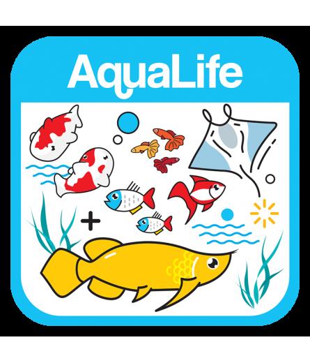 Tropical Fish (27)